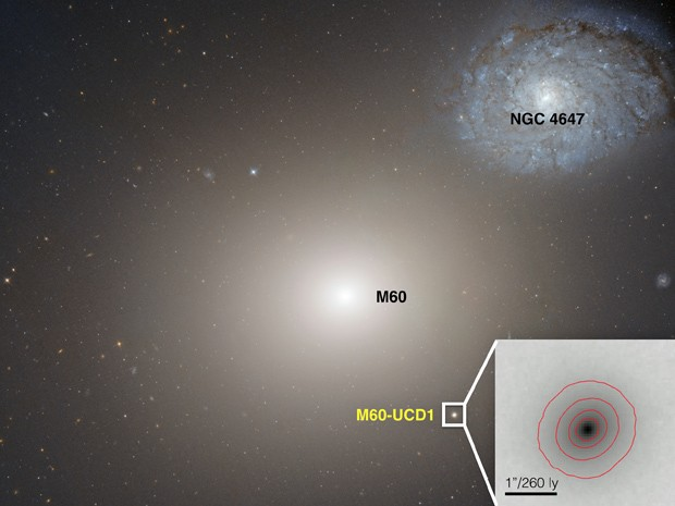 Imagem feita pelo telescópio espacial Hubble mostra a galáxia anã M60-UCD1, ponto claro abaixo e à direita da galáxia maior, M60  (Foto: NASA/Space Telescope Science Institute/European Space Agency )